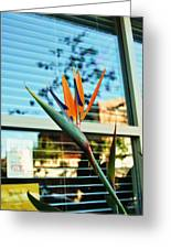 Bird Of Paradise-2 Greeting Card by Todd Sherlock