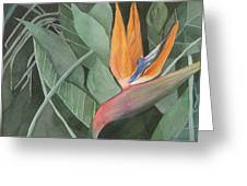 Bird Of Paradise Greeting Card by Heidi Patricio-Nadon