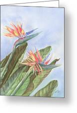 Bird Of Paradise Greeting Card by Leona Jones