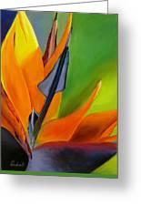 Bird Of Paradise Greeting Card by Prashant Shah