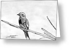 Bird Greeting Card by Shashi Kumar