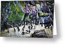 Birds At Cape St. Mary's Bird Sanctuary In Newfoundland Greeting Card by Elena Elisseeva