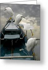 Birds Boat And Beyond Greeting Card by Henry Murray