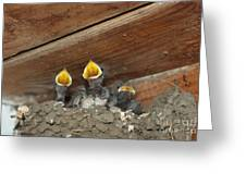 Birds In Nest Picture Greeting Card by Preda Bianca