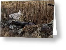 Birds Of Bc - No.13 - Snowy Owl Doo Doo Greeting Card by Paul W Sharpe Aka Wizard of Wonders