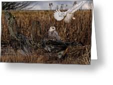 Birds Of Bc - No.14 - Snowy Owl Fly By Greeting Card by Paul W Sharpe Aka Wizard of Wonders
