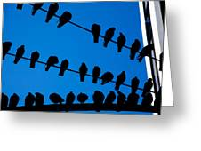 Birds On A Wire Greeting Card by Karol  Livote