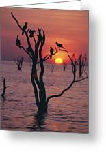 Birds On Tree, Lake Kariba At Sunset Greeting Card by Axiom Photographic