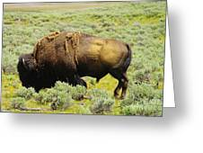 Bison Greeting Card by Jeff  Swan