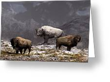 Bison King Greeting Card by Daniel Eskridge