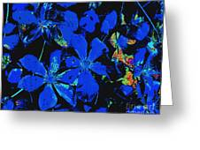 Black And Blue Clematis - Digital Painting Greeting Card by Merton Allen