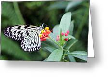 Black And White Butterfly  Greeting Card by Abiy Azene