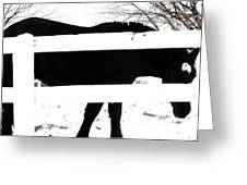 Black And White Greeting Card by Todd Sherlock