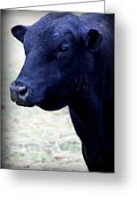 Black Angus Bull - Side Profile Greeting Card by Tam Graff