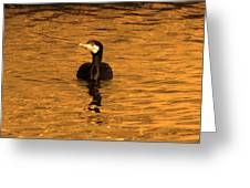 Black Bird On Surise Greeting Card by Radoslav Nedelchev