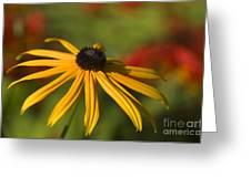 Black-eyed Susan 2 Greeting Card by Sharon  Talson