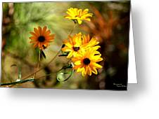 Black Eyed Susans Greeting Card by Suzanne  McClain