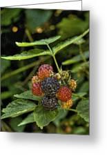 Black Raspberry Dream Greeting Card by William Fields
