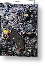 Black Rock At Graue Mill Greeting Card by Todd Sherlock