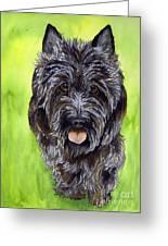 Black Scottish Terrier Greeting Card by Cherilynn Wood