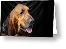 Bloodhound - Governed By A World Of Scents Greeting Card by Christine Till