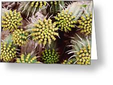 Blooming Cacti Greeting Card by Alexandra Jordankova