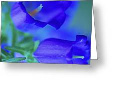 Blue Bell Flowers Greeting Card by Kathy Yates