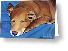 Blue Blanket Greeting Card by Pat Saunders-White