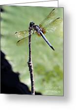Blue Dasher Dragonfly Dancer Greeting Card by Sabrina L Ryan