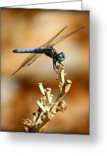 Blue Dragonfly Greeting Card by Tam Graff