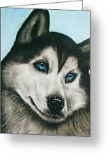 blue eye Husky  Greeting Card by Anastasis  Anastasi