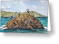 Blue Footed Boobies In Galapagos Greeting Card by Bonnie Sue Schwartz