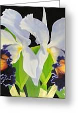Blue Heaven Greeting Card by Carol Reynolds