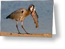 Blue Heron Vs. Rainbow Trout Greeting Card by Paul Marto