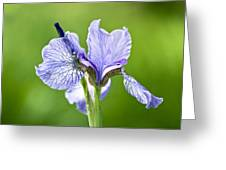Blue Iris Germanica Greeting Card by Frank Tschakert