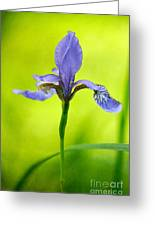 Blue Japanese Iris Greeting Card by Lois Bryan
