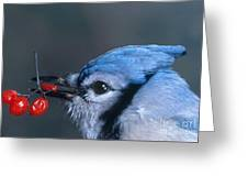 Blue Jay Greeting Card by Photo Researchers, Inc.