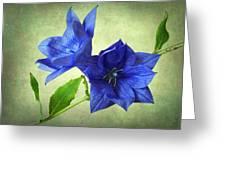 Blue Greeting Card by John Burnett