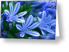 Blue Lily Of The Nile Greeting Card by Sabrina L Ryan