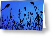 Blue Morning Greeting Card by Todd Sherlock