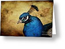Blue Peacock Greeting Card by Angela Doelling AD DESIGN Photo and PhotoArt