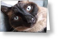 Blue Siamese Eyes Greeting Card by Brian  Maloney