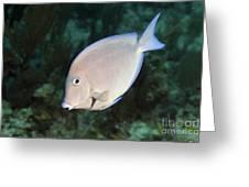 Blue Tang On Caribbean Reef Greeting Card by Karen Doody