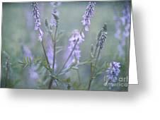 Blue Vervain Greeting Card by Priska Wettstein