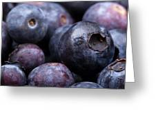Blueberry Background Greeting Card by Jane Rix