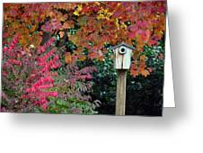 Bluebird House Color Surround Greeting Card by Sandi OReilly