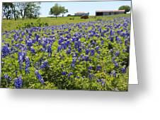 Bluebonnet Farmhouse Greeting Card by Lynnette Johns
