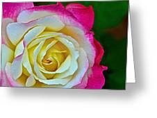 Blushing Rose Greeting Card by Bill Owen