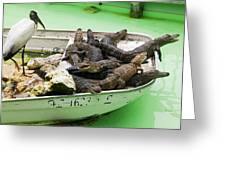 Boat Full Of Alligators  Greeting Card by Garry Gay