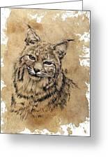 Bobcat Greeting Card by Debra Jones